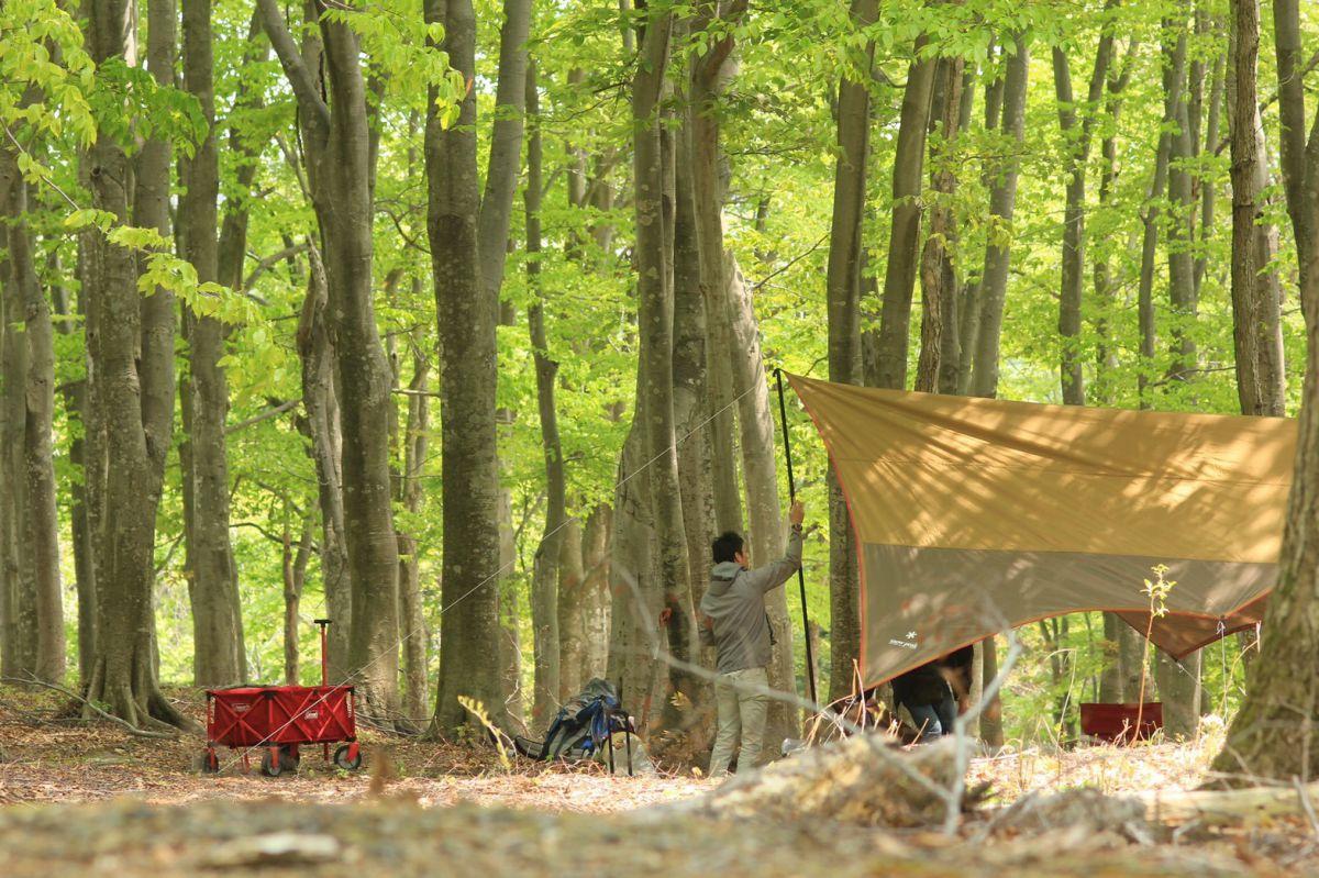 ブナの森園キャンプ場。